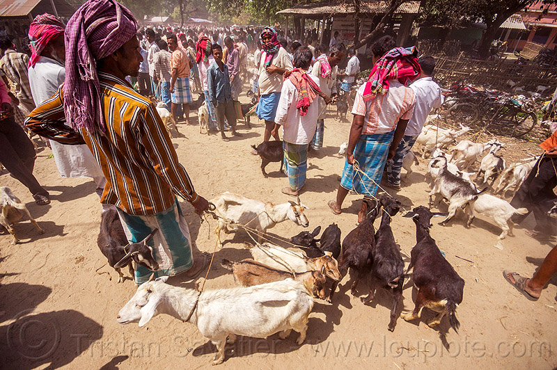 farmers with goats on leash - cattle market (india), crowd, goat kids, men, people, west bengal
