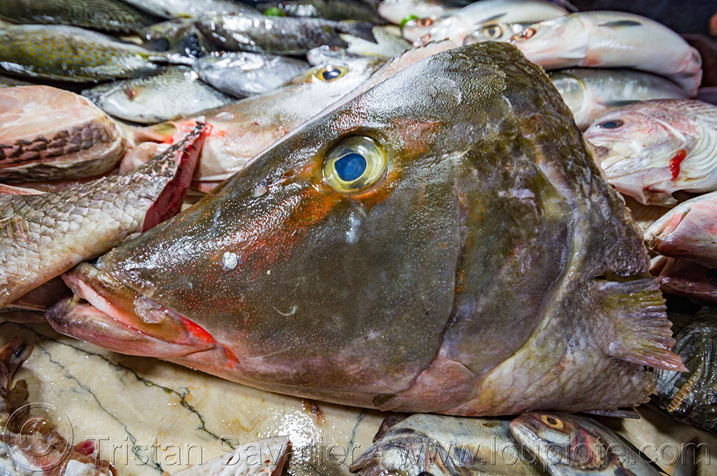 fish head (philippines), baguio, cut, fish head, fish market, fishes, philippines, severed