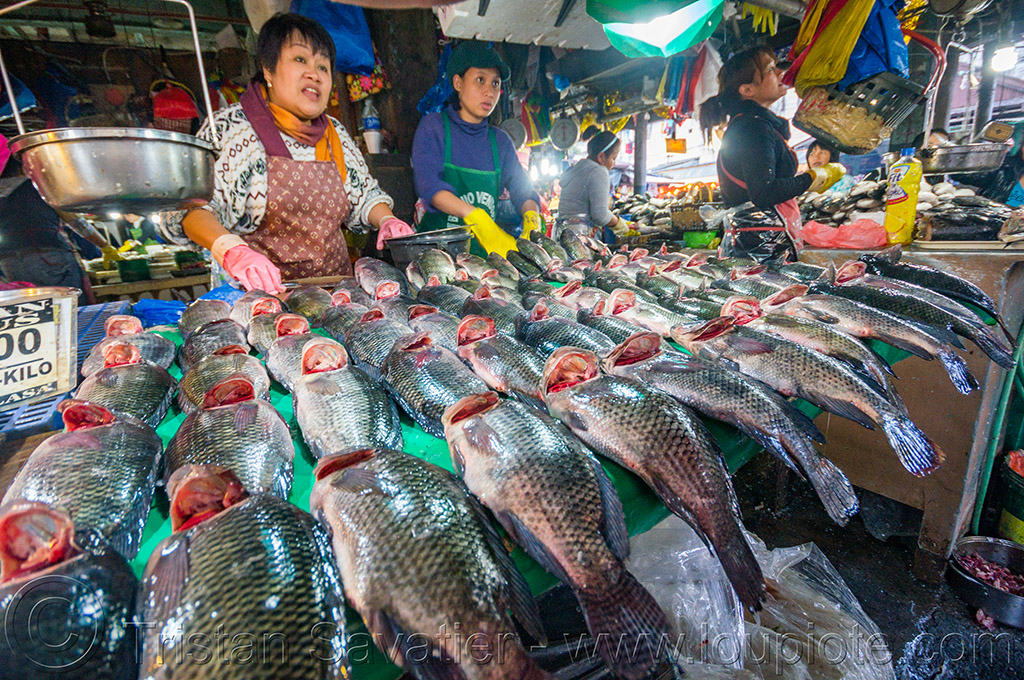 fish market - baguio (philippines), baguio, fish market, fishes, merchant, philippines, stall, vendor, woman