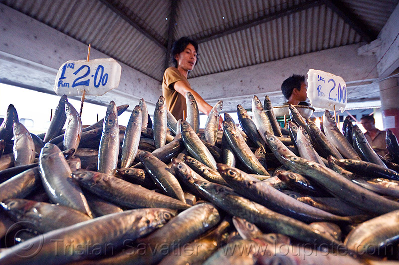 fish market stall, dead fishes jumping, fish market, food, lahad datu, men, merchant, seafood, vendors