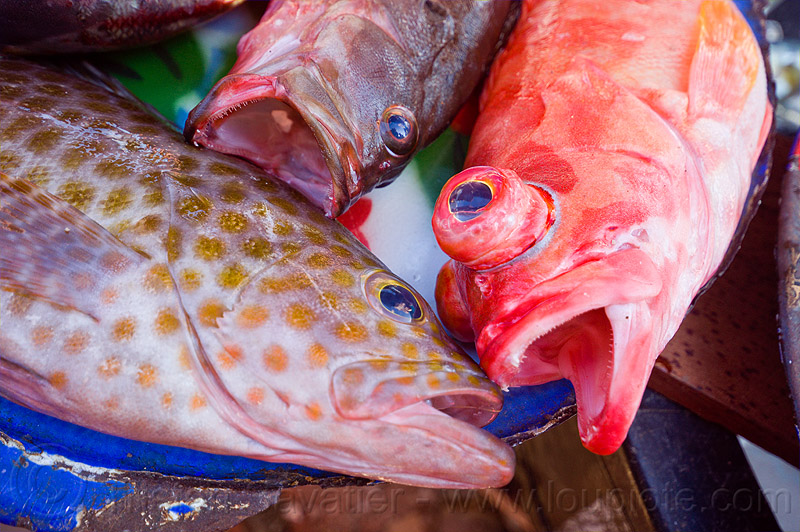 fishes at market, fish market, flores, fresh fish