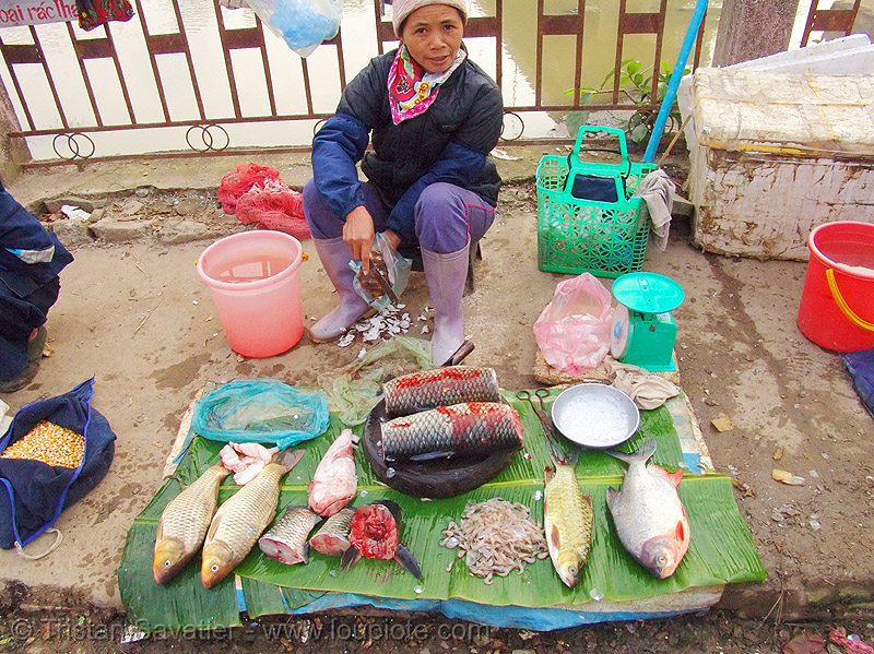 fishes on the market - vietnam, cao bang, cao bằng, fish market, stall, street market