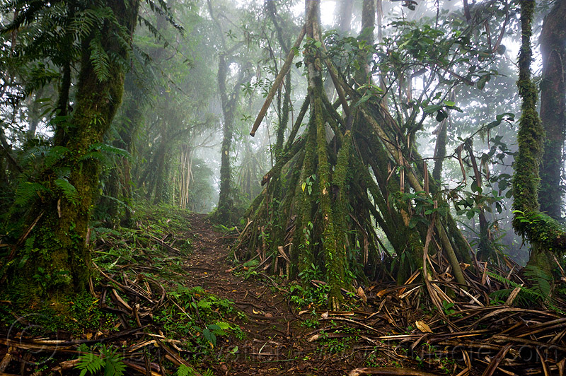 foggy trail in rainforest, bali, fog, foggy, forest, pura lempuyang, rainforest, temple, trees