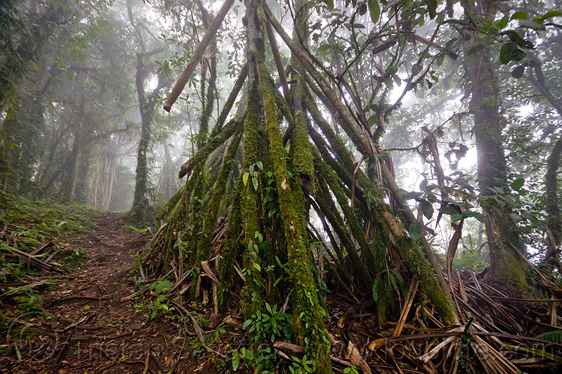 foggy trail in rainforest, bali, fog, foggy, forest, indonesia, pura lempuyang, rainforest, trees