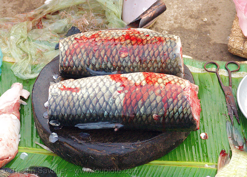 fresh fish, cao bang, cao bằng, fish market, fish scales, fishes, two