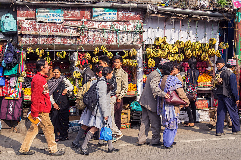 fruit store with hands of banana hanging - darjeeling (india), bananas, darjeeling, fruits, gorkhaland, market, shop, store, street, walking