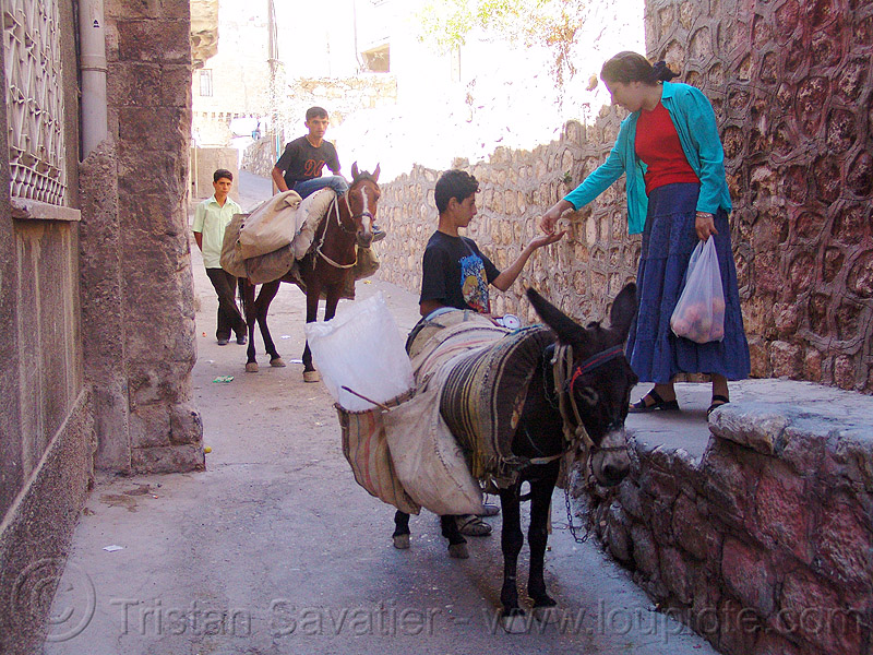 fruit vendors on donkey and horse, asinus, donkey, equus, fruit vendors, horse riding, horseback riding, kurdistan, man, mardin, pack animals, pack horses, street seller, trading, working animals