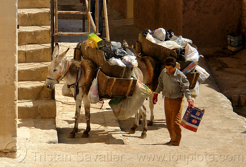 garbage pickup donkeys, asinus, donkeys, equus, garbage pickup, man, mardin, trash pickup, working animals