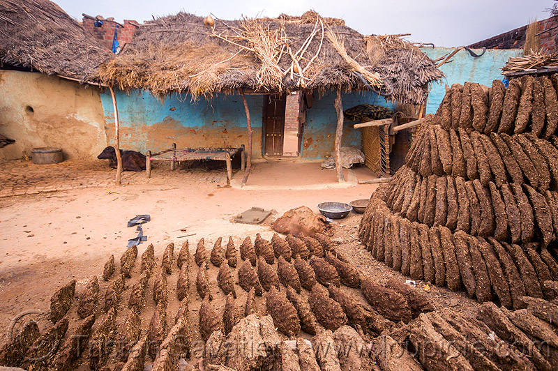 gobar - cow dung drying in indian village, cow manure, cow pats, cow pies, dried cow dung, dry cow dung, drying, gobar, house, khande, khoaja phool, village, खोअजा फूल