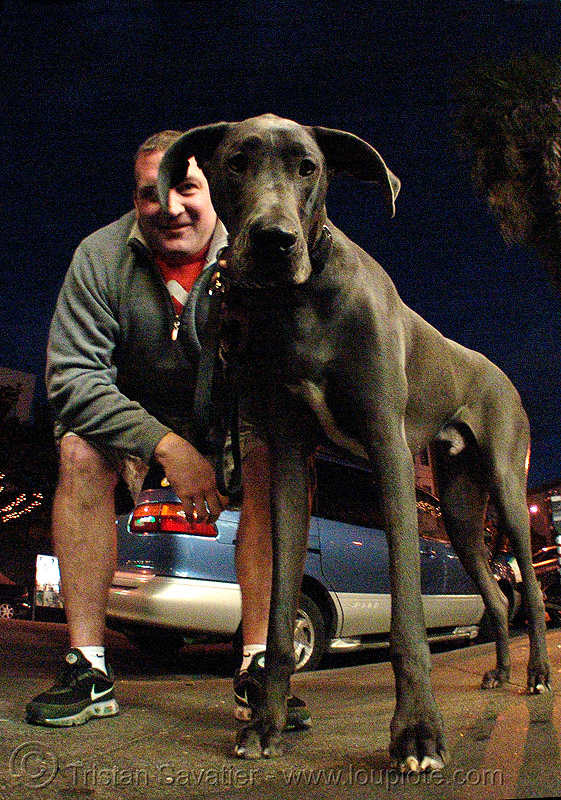 great dane - big dog, fisheye, man, people
