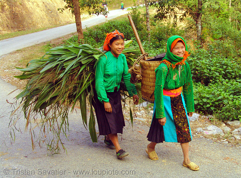 green hmong tribe girls carrying grass - vietnam, asian woman, asian women, backpacks, green hmong, hill tribes, hmong tribe, indigenous, road, tribe girls