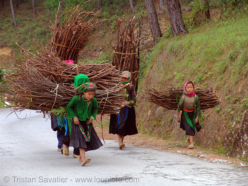 green hmong tribe girls carrying wood bundles - vietnam, children, girls, green hmong, hill tribes, hmong tribe, indigenous, kids, wood bundles