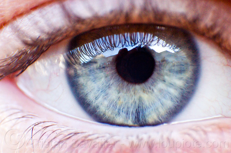 grey eye closeup, clemence, close-up, clémence, gray eye, iris, macro, people, pupil, reverse lens macro, right eye, texture, woman