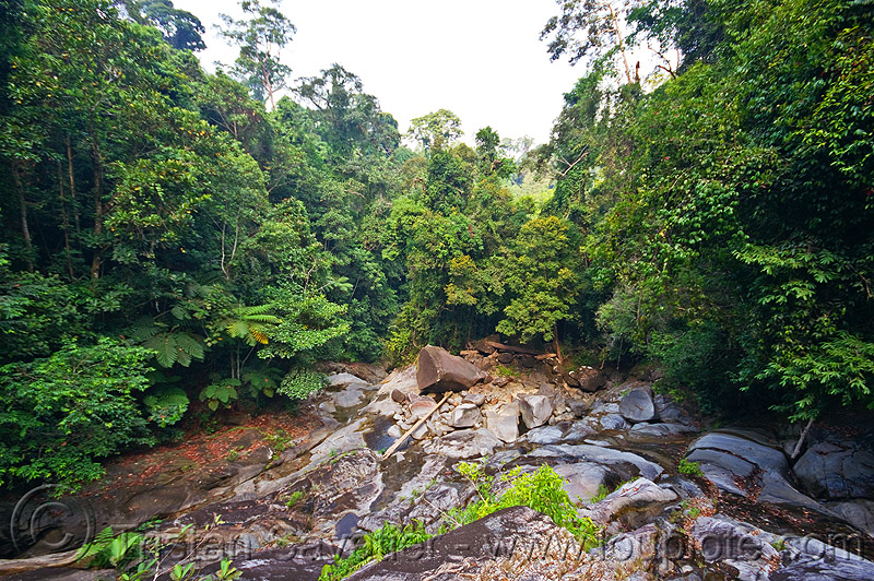 gunung gading national park, gunung gading, jungle, rain forest