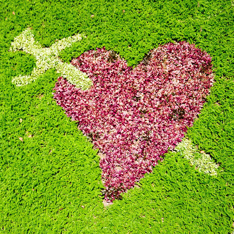 heart pierced with sword - turf, grass, green, la paz, lawn, love, symbol