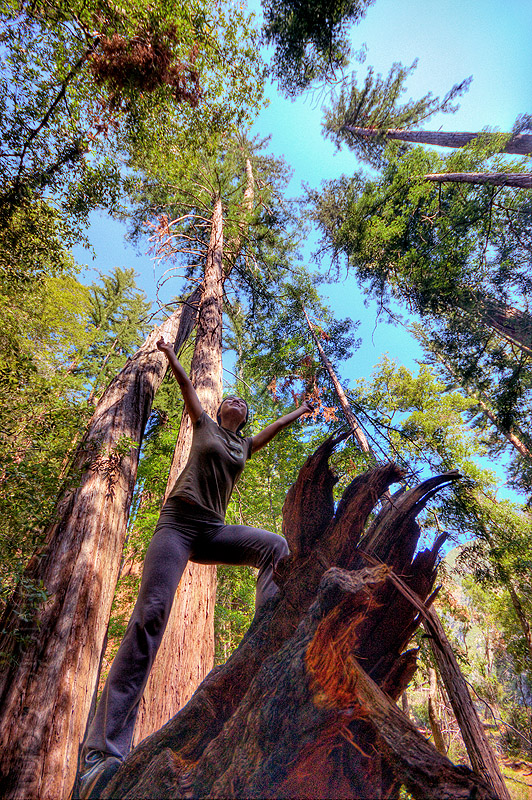 redwood forest, big sur, fallen tree, forest, pine ridge trail, redwood tree, sequoia sempervirens, sharon, standing, tree trunk, trekking, vantana wilderness, woman