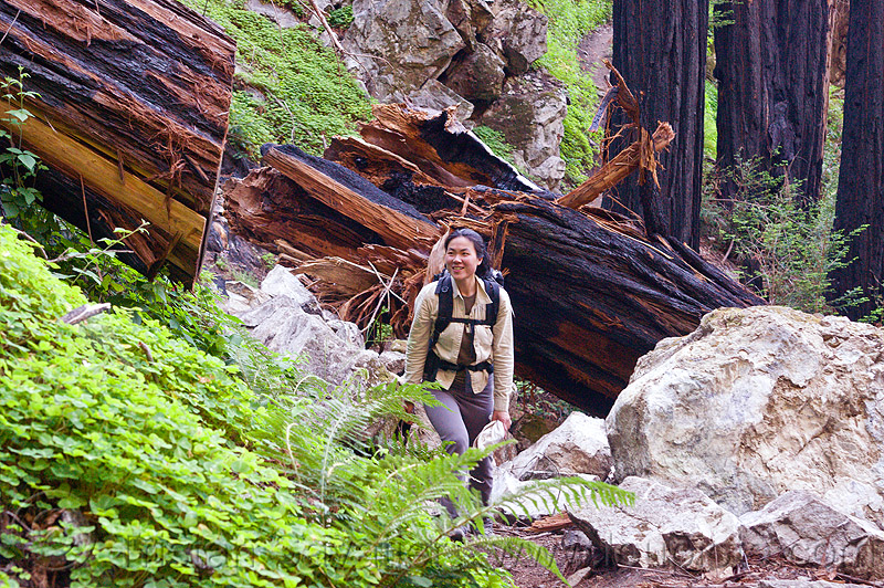 fallen redwood tree, backpack, backpacking, big sur, fallen tree, forest, pine ridge trail, redwood tree, sequoia sempervirens, sharon, tree log, tree trunk, trekking, vantana wilderness, woman