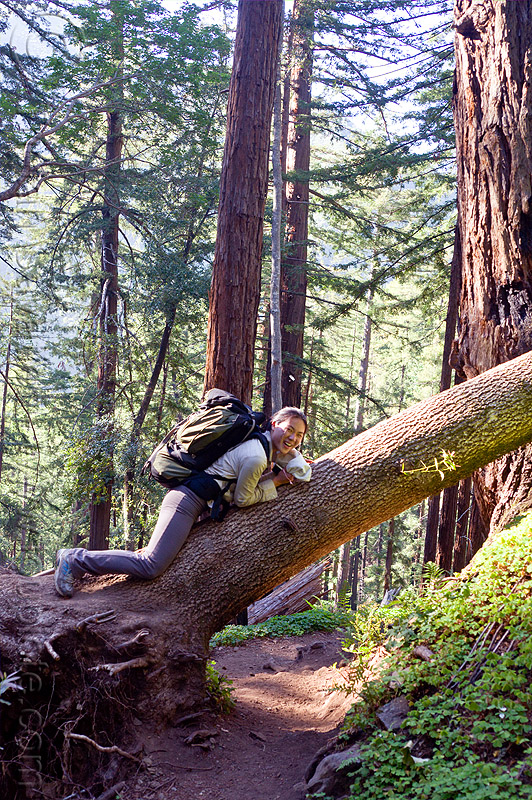 resting on fallen tree, backpack, backpacking, big sur, fallen tree, forest, lying down, pine ridge trail, resting, sharon, tree trunk, trekking, vantana wilderness, woman