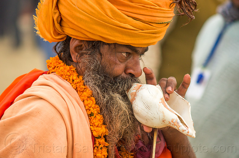 hindu devotee blowing a ritual conch, baba, beard, blowing, conch, headdress, headwear, hindu, hinduism, kumbha mela, maha kumbh mela, man, musical instrument, sadhu, sea shell, turban