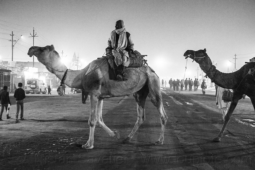 hindu man riding camel - crossing street - kumbh mela 2013 (india), double hump camels, hindu pilgrimage, hinduism, in tow, india, maha kumbh mela, man, night, pilgrim, riding, towing, walking