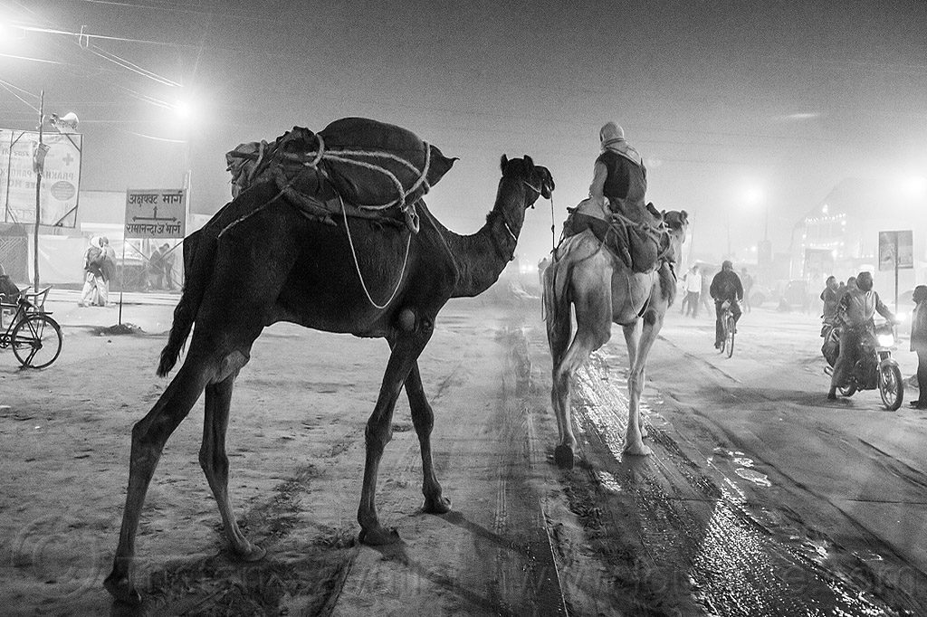 hindu pilgrim riding camel in street - kumbh mela 2013 (india), backlight, double hump camels, hindu pilgrimage, hinduism, in tow, india, maha kumbh mela, man, night, pilgrim, riding, towing, walking