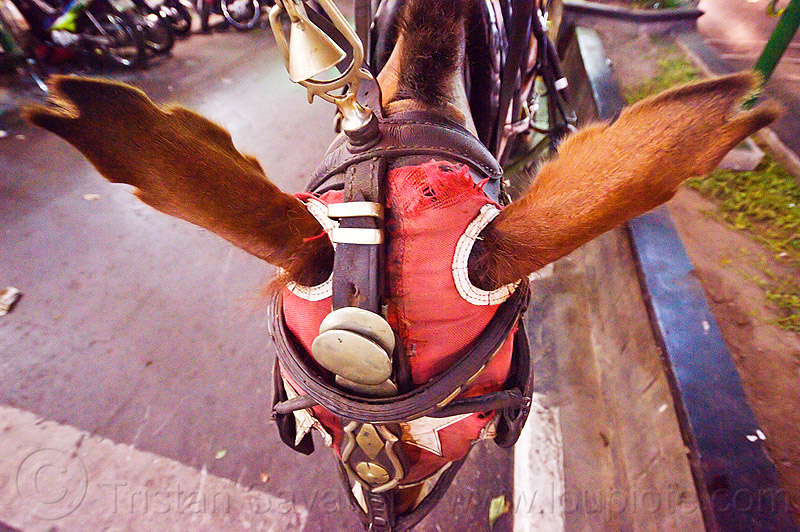 horse with clipped ears, body modification, bodymods, bridle, draft horse, draught horse, ears, hood, java, jogja, jogjakarta, malioboro, mask, night, street, yogyakarta