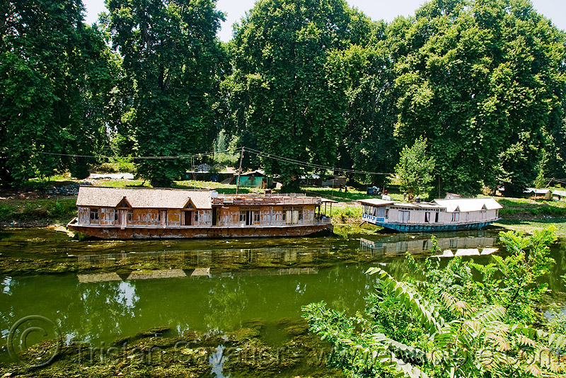 house boats - srinagar - kashmir, floating, lake, trees, water, سِرېنَگَر, شرینگر, श्रीनगर