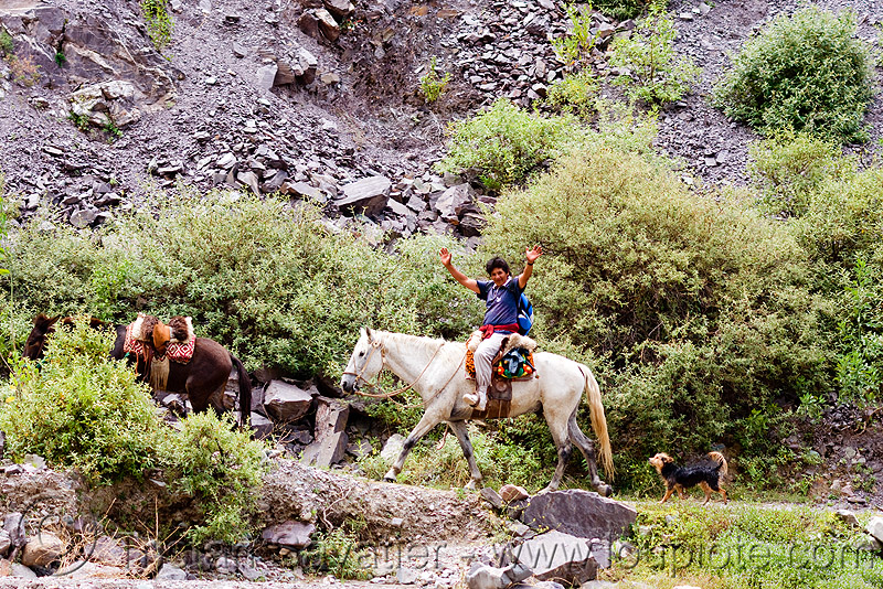 indigenous man riding horse to the village (argentina), horse-riding, horseback riding, iruya, noroeste argentino, people, pony, quebrada de humahuaca, river bed, san isidro, trail, trekking, white horse