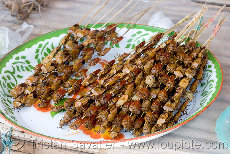 insects on a stick - snack food (laos), edible bugs, edible insects, entomophagy, food, laos, roasted, skews
