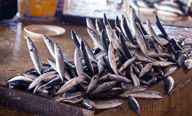 jumping fishes, dead fishes jumping, fish market, food, lahad datu, seafood