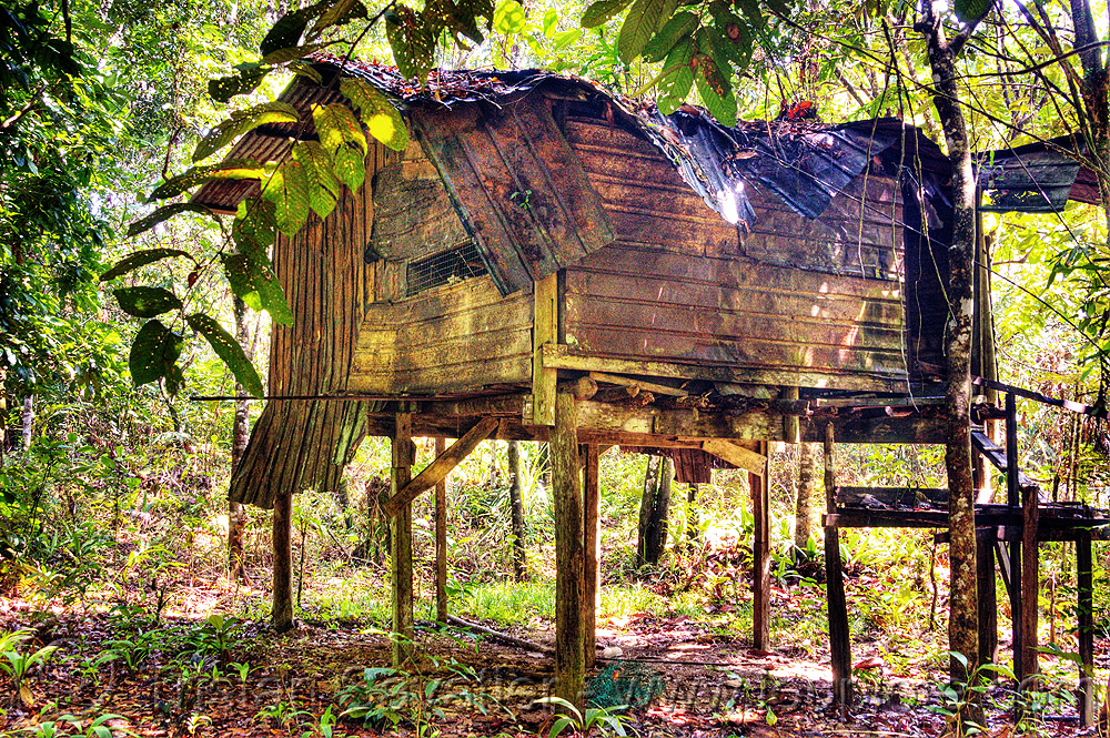 jungle hut - gunung mulu national park (borneo), borneo, cabin, corrugated, decaying, gunung mulu national park, house, hut, indigenous, jungle, malaysia, metal panels, rain forest, ruins, rusty, stilts, wooden