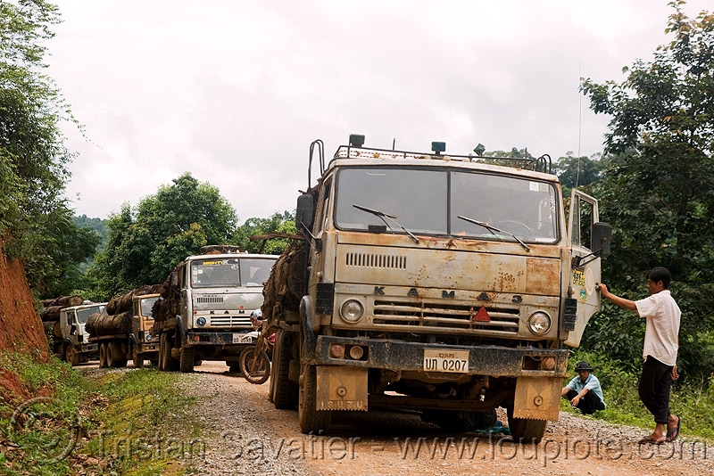 Камаз - KAMAZ russian logging trucks convoy (laos), deforestation, dirt road, kama automobile zavod, kamskiy avtomobilny zavod, log truck, lorry, timber, tree logging, tree logs, trees, unpaved, wood, камаз, камский автомобильный завод