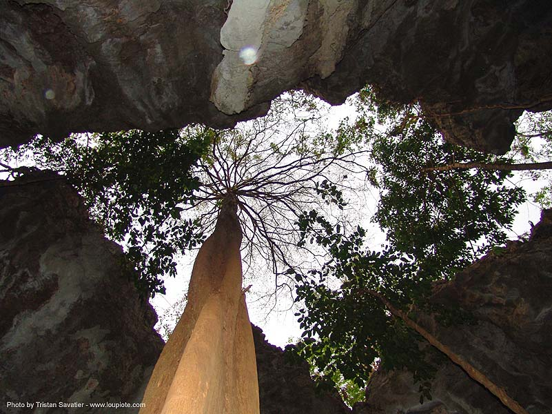 karstic area - tree between rocks - thailand, karst, karstic, tree, wonder cave, ประเทศไทย