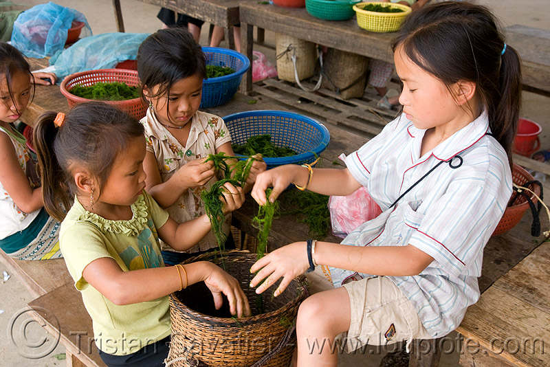kids preparing algaes (laos), children, girls, little girl, people