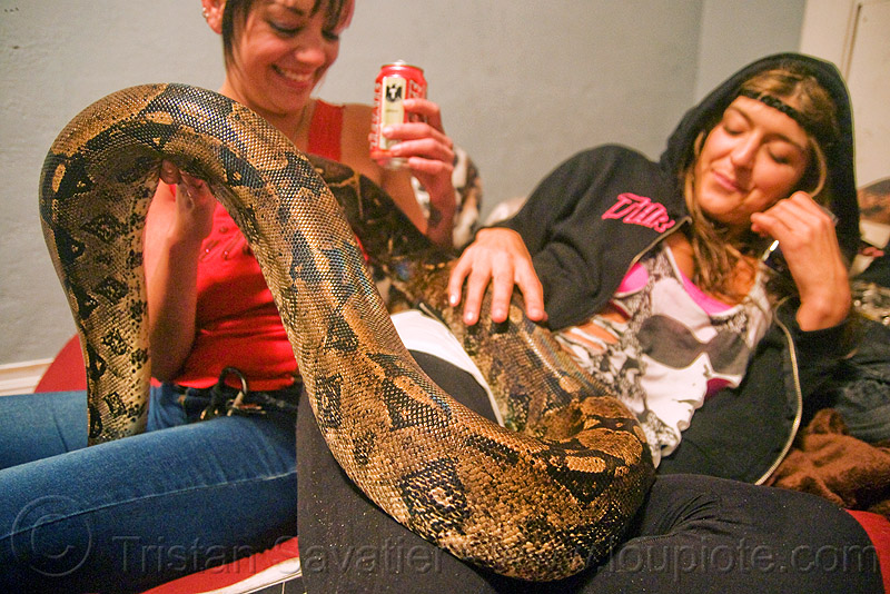 large pet boa snake, boa constrictor, eva, melody, pet snake, women