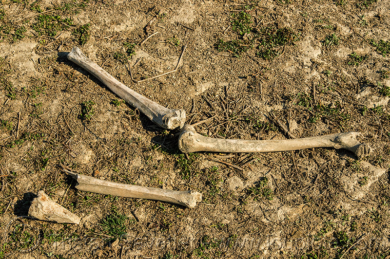 human skeletal remains in ganges flood plain, india, Skeleton