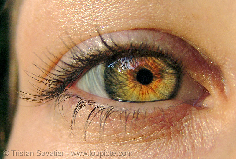 liza's eye with hazel / rusty iris, close up, eye color, hazel, iris, liz, liza, woman