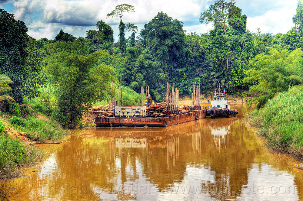 logging barge on muddy river, boat, boat landing, clouds, cloudy, cloudy sky, deforestation, environment, forest, jungle, rain forest, river barge, tow boat, tree logging, tree logs, tree trunks, water