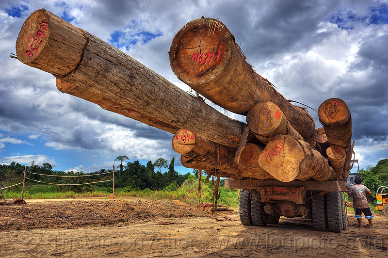 logging truck (borneo), clouds, cloudy sky, deforestation, environment, logging camp, logging truck, lorry, man, rain forest, tree logging, tree logs, tree trunks, worker