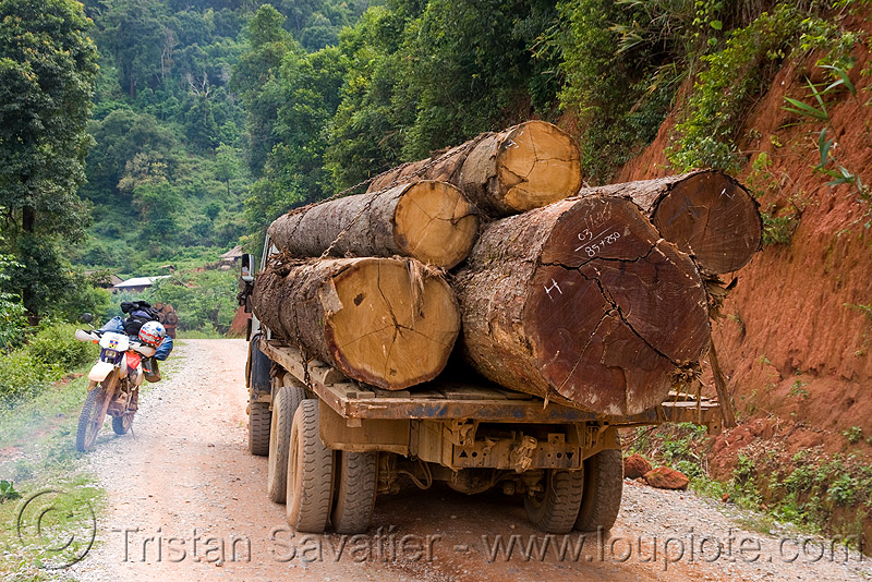 logging truck (laos), 250cc, convoy, deforestation, dirt road, honda motorcycle, honda xr 250, log truck, logging trucks, lorry, motorbike, timber, touring, tree logging, tree logs, trees, unpaved, wood, stock photo
