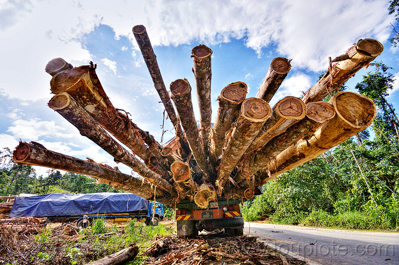 logging truck - tree logs, borneo, deforestation, environment, logging camp, logging truck, lorry, malaysia, rain forest, road, tree logging, tree logs, tree trunks, trucks, vanishing point