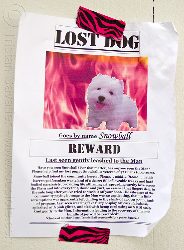 lost dog - snowball - burning man 2013, burning man, lost dog, sign