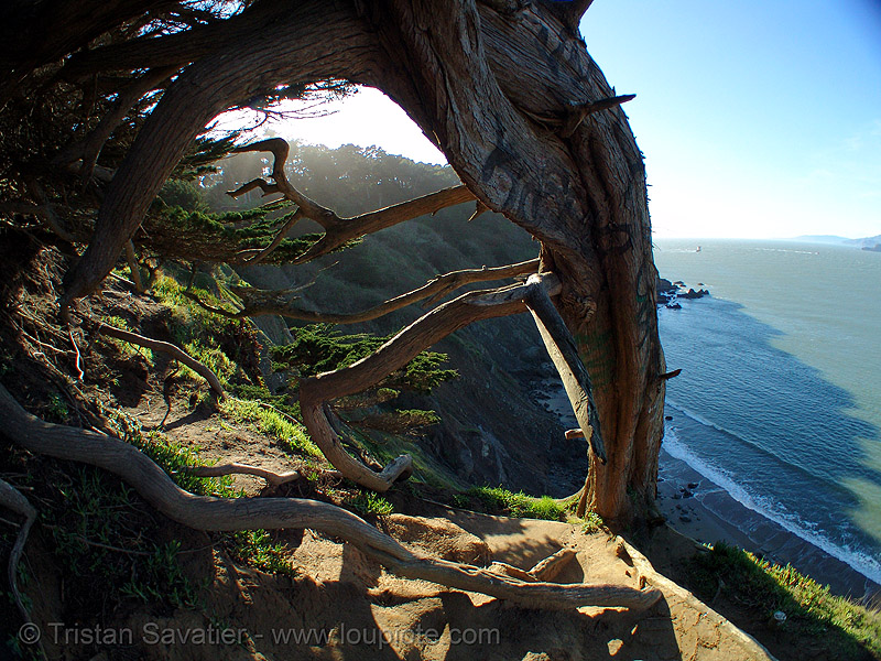 lover's point, near deadman's point (san francisco), cliff, dead man, deadman's point, fisheye, ocean, seashore, tree