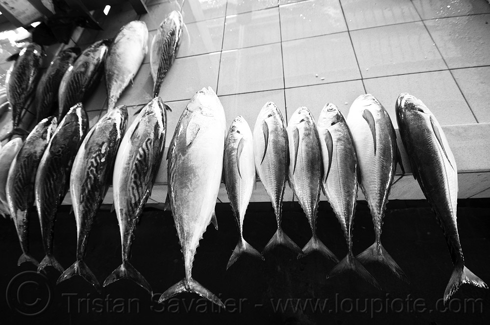 mackerel and tuna - fish market, fishes, food, seafood