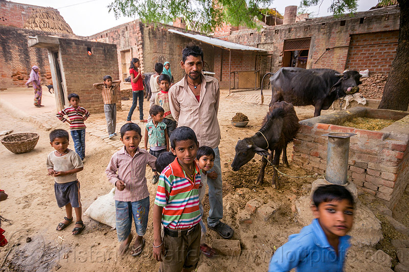 man and boys (and water buffaloes) in indian village, children, cows, crowd, khoaja phool, kids, manger, people, खोअजा फूल