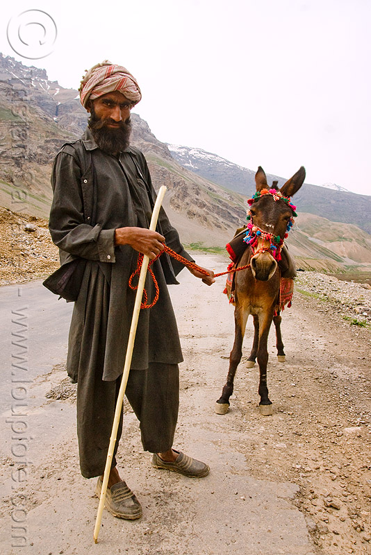 man and his pony - drass valley - leh to srinagar road - kashmir, cane, dras valley, gujjars, horse, kashmiri, kashmiri gujjars, mountains, muslim, nomads, people, zoji, zoji la, zoji pass, zojila pass