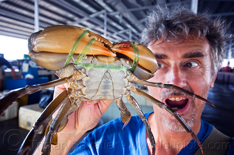 mangrove crab, claws, fish market, food, legs, man, mangrove crab, mud crab, portunidae, scylla crab, seafood, self portrait, selfie, swimmer crab, tristan savatier