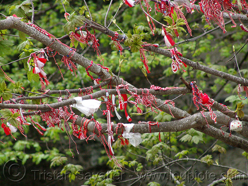 martenitsa - good-luck rubans - tree branches (bulgaria), branches, good-luck, martenitsa, rubans, tree, българия