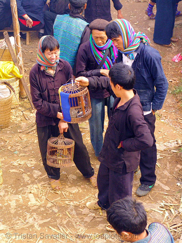 men looking at caged birds - vietnam, hill tribes, indigenous, market, mèo vạc