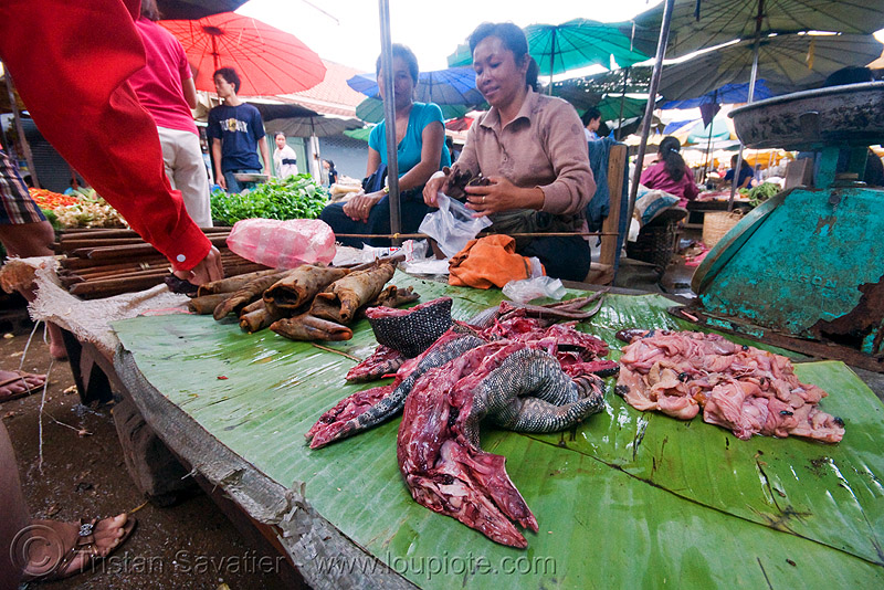 monitor lizard meat on the market, bayawak, faniyas, giant lizard, hilay, luang prabang, meat market, meat shop, merchant, people, raw, raw meat, reptile, varanidae, varanus, vendor